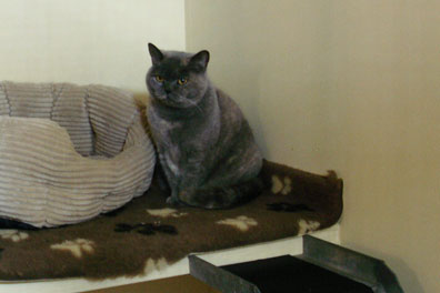The cosy life! At New Barn Farm Cattery, Ashford Kent